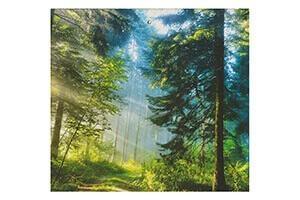 Аура леса