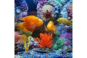 аквариум литература