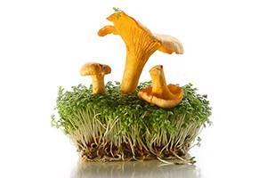 газета грибы