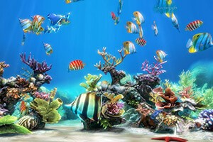 аквариум на рабочий стол